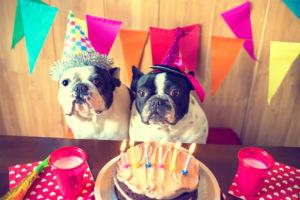Lll Achtung Geniale Geburtstagswunsche Fur Frauen Und